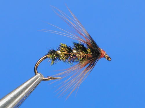Brown-Hackle-.jpg